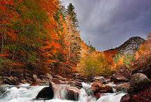 Autumn / by Gloria Washington