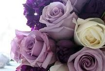 It's a Nice Day for a Purple Wedding!! / by Mary Cusic Salango