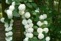 Garden Plants:Tried/Have/Want / by Louloo Begonia