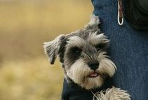 Man's best friend... / But dogs love women too! / by Loretta Lindsey