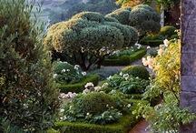 Secret Garden / by Tori West