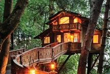 Home Tree Home / Fantabulous tree houses / by Miss Lisa Wyatt