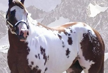 horses / by Ann Hoff