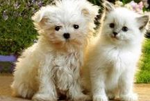 Cute Pets! / by Cylese Hinton