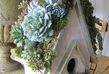 garden / by Robin Grace
