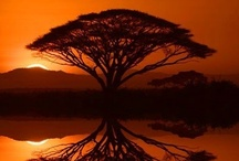Africa Group Board ✈  / ✈ AFRICA Group Board ☛ PIN YOUR BEST SCENIC PHOTOS For This Board, NO PEOPLE or PET PHOTOS, NO DOLLAR $IGNS, NO SPAM.  / by Pin The World 1,000+ Group Boards