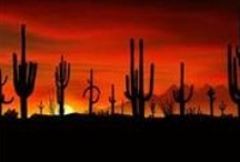 Arizona Group Board ✈  / Arizona GROUP BOARD ☛ PIN YOUR BEST SCENIC PHOTOS For This Board, NO PEOPLE or PET PHOTOS, NO DOLLAR $IGNS, NO SPAM.  / by Pin The World 1,000+ Group Boards