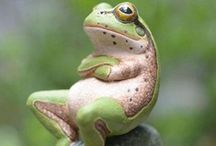 Sexy Frogs / by Peggy Jensen