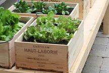 PLAN   Gardening / by Earthbound Farm