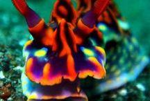 Ocean Life / by Margeaux B.