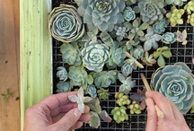❉ Succiɴcт  Succuleɴтs ❉ / Sedums and Succulents / by ✿⊱ ᎷᎯᏒᎥᏖᏕᎯ'Ꮥ ᎶᎯᏒᎠᎬN ⊰✿
