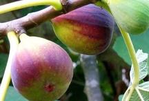 ❦ Orcɧarɗ  Ѽ cɧarɱ ❦ / Apples, pears, plums...... See also 'Proper Pruning' / by ✿⊱ ᎷᎯᏒᎥᏖᏕᎯ'Ꮥ ᎶᎯᏒᎠᎬN ⊰✿
