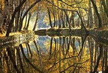 Reflections / by Rosemarie Eisele