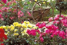 Gardens and flowers / by Mary Etta Wolfe