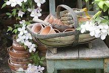Gardening / by Annette White