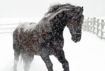 Noble steeds / Upon my faithful steed, there is nothing I feel I cannot concur.  / by Alina