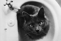 Feline Fancy / by Melissa Kennedy