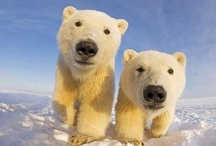 #SaveTheArctic / by Greenpeace Argentina