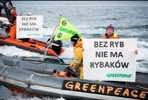 Sostieni chi pesca sostenibile  / I nostri mari, una volta pieni di vita, sono in pericolo! La pesca eccessiva, l'inquinamento e adesso anche le perforazioni petrolifere rischiano di svuotarli per sempre. Non c'è più tempo da perdere, dobbiamo fermare ogni attività distruttiva e pericolosa in mare e gestire le risorse in modo sostenibile. Puoi farlo anche tu su https://myboat.gp/it/ / by Greenpeace Italia