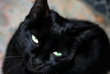 "Black cats are poetic / •""Sometimes it happens that a black cat lets you pass in front of it."" ~ Author Unknown / by Skyclad at Midnight"