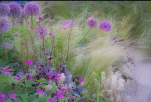 Garden / by E Broekhof