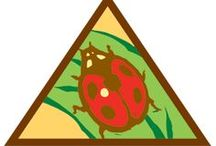 Brownie Bugs Badge Ideas / Requirements for Brownie Bug Badge:  Step 1: Draw a bug poster.  Step 2: Try a bug craft.  Step 3: See bugs in action.  Step 4: Explore bug homes.  Step 5: Take a bug field trip.  / by Brownie Girl Scout Badges