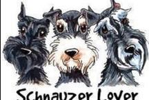 SCHNAUZERS !!!! / My favorite dog ever ! / by Deidre Simon