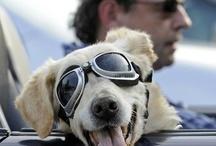 Dogs...mans BEST Friend / by Bobby Schaefer Schaef Designs Jewelry.com