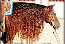 horse braids / by Sabrina Thuerauf