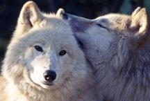 Wolves / by Tanya Demyen