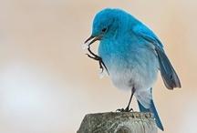 Birds / by Jean Bloom