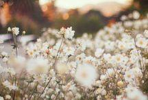 FLOWERS / by MacKenzie Gorman
