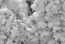 Winter / by Helen Christiansen
