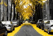 Mellow Yellow / by Raechel