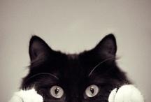 Meow  / by Azul Valente