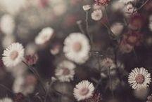 Art/Photography / by Angela Beattie