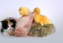 Funny Animals / by U so silly !