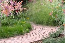 plant combinations sun / by Nebraska Statewide Arboretum