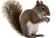 Feed Birds & Squirrels / by Carmen Williams