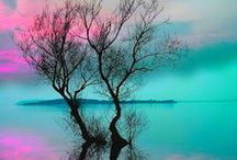 Trees / Trees:  Art and photography / by Julie S.