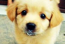 I Heart Dogs / Fun, funny, and cute videos and pics of dogs! / by I Heart Pets