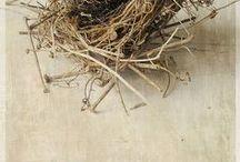 Bird and nest art / by Joyce Roessler