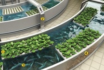 < URBAN FARMING > / Urban farming gardening , Sustainable living architecture , Green Eco friendly , Zero waste , Vertical farm garden for saving space , Green roofs buildings houses cities / by Zero Waste Solutions