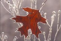 Autumn / Fall / by Elena Bettega