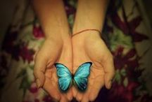 My Obsession...Butterflies<3 / by Marianne Smith