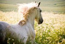 Horses / by Nanda Castella