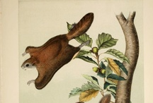 Nature in Motion / by BHL