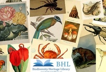 BHL Past Events, Posters, Flyers, Videos, etc. / by BHL