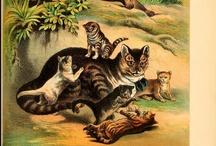 Baby Animals in BHL! / by BHL