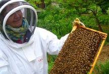 Urban Beekeeping / by Toronto Botanical Garden